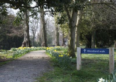 Bowes-Museum-Woodland-Walk